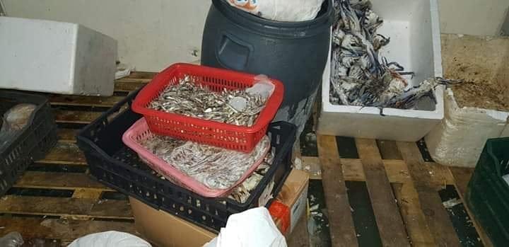 """ضبط """"طن"""" من الأسماك منتهية الصلاحية"""