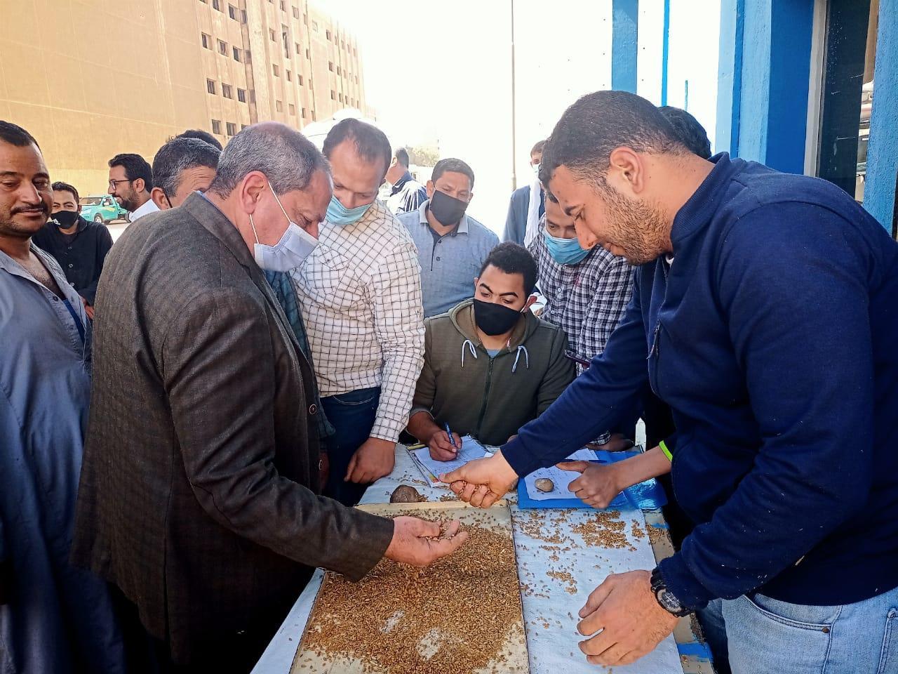 محافظ المنيا: بدء توريد محصول القمح بالشون الحكومية