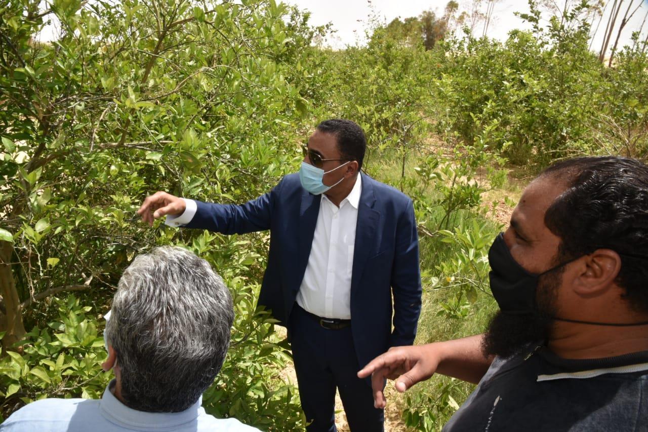 محافظ مطروح يتفقد مزارع النخيل والزيتون بواحه سيوه