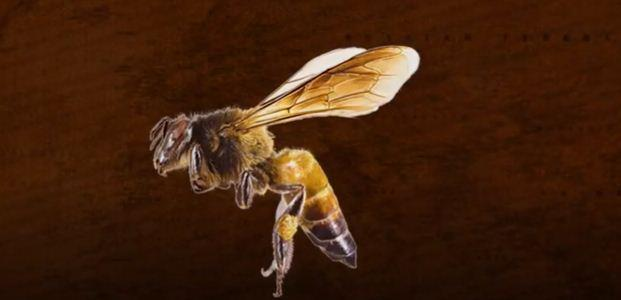 لماذا يخاطر صيادو النحل بأرواحهم للحصول علي العسل المهلوس