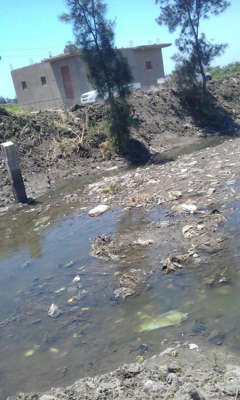 الزراعة تحتضر بكفر الشيخ .. ترعة «السخاوي» مريضة بالجفاف