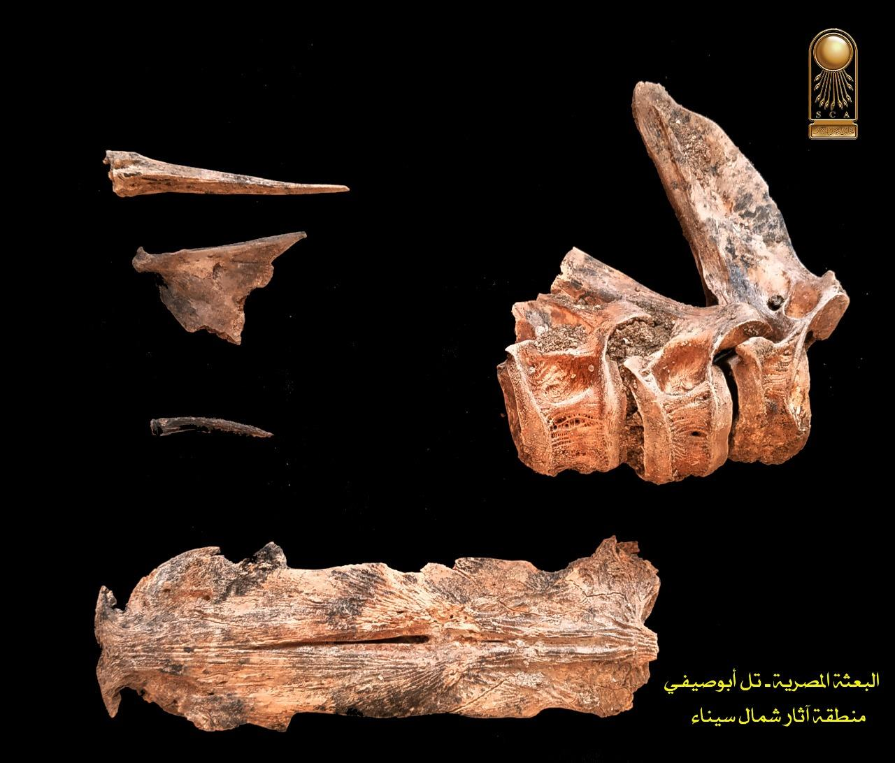 ورشة بناء وإصلاح المراكب والسفن بتل آثار أبوصيفي