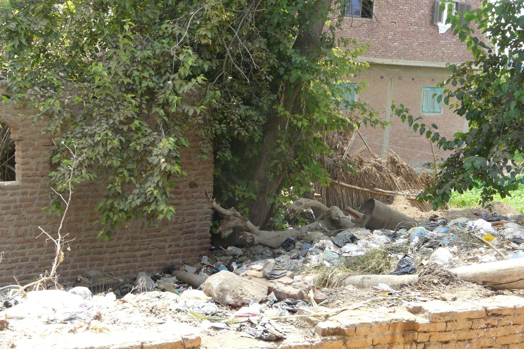 أهالي قرية ساقية أبو شعرة بأشمون يناشدون  بإزالة القمامة