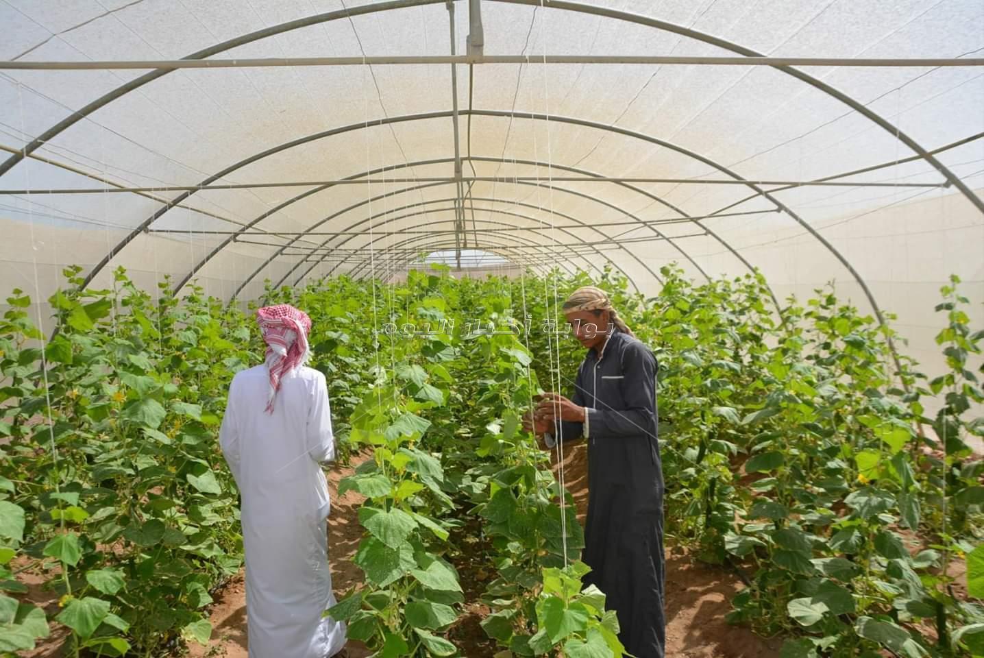 فودة يتفقد مزارع تجمع ابو غراقد للمنتجات والصوب الزراعية