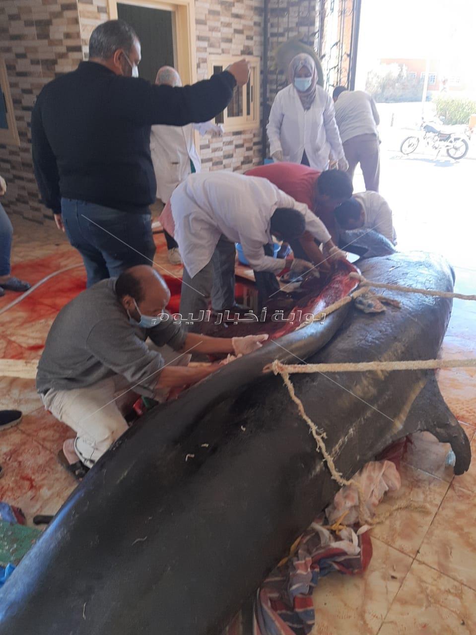 """تعرف على السبب الحقيقى لنفوق """"الحوت القاتل"""" بعد تشريحة بمعهد علوم البحار"""