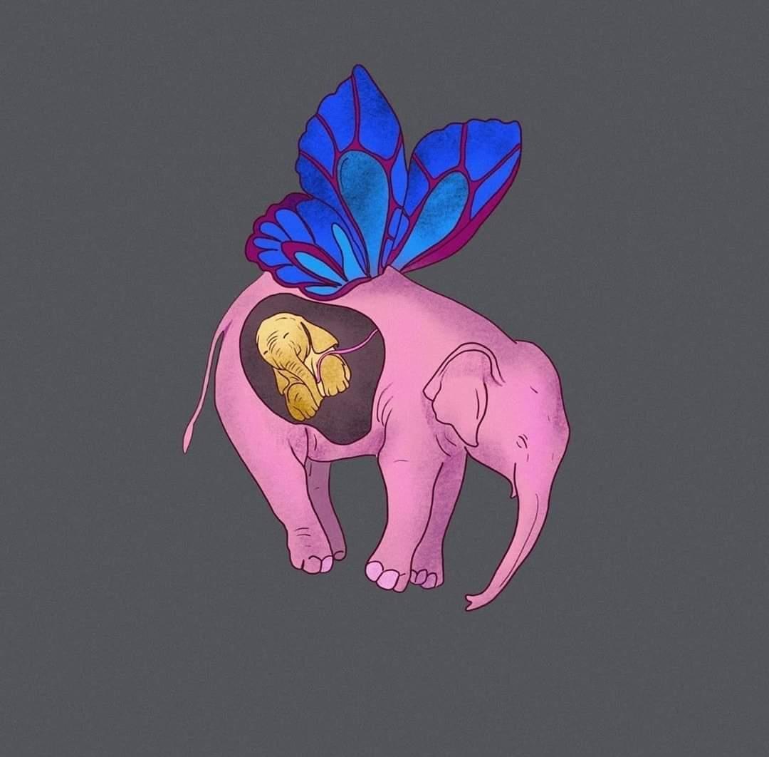 نفوق أنثى الفيل وجنينها