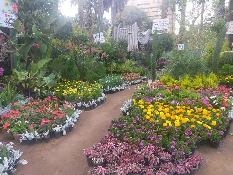 معرض زهور الربيع 2021