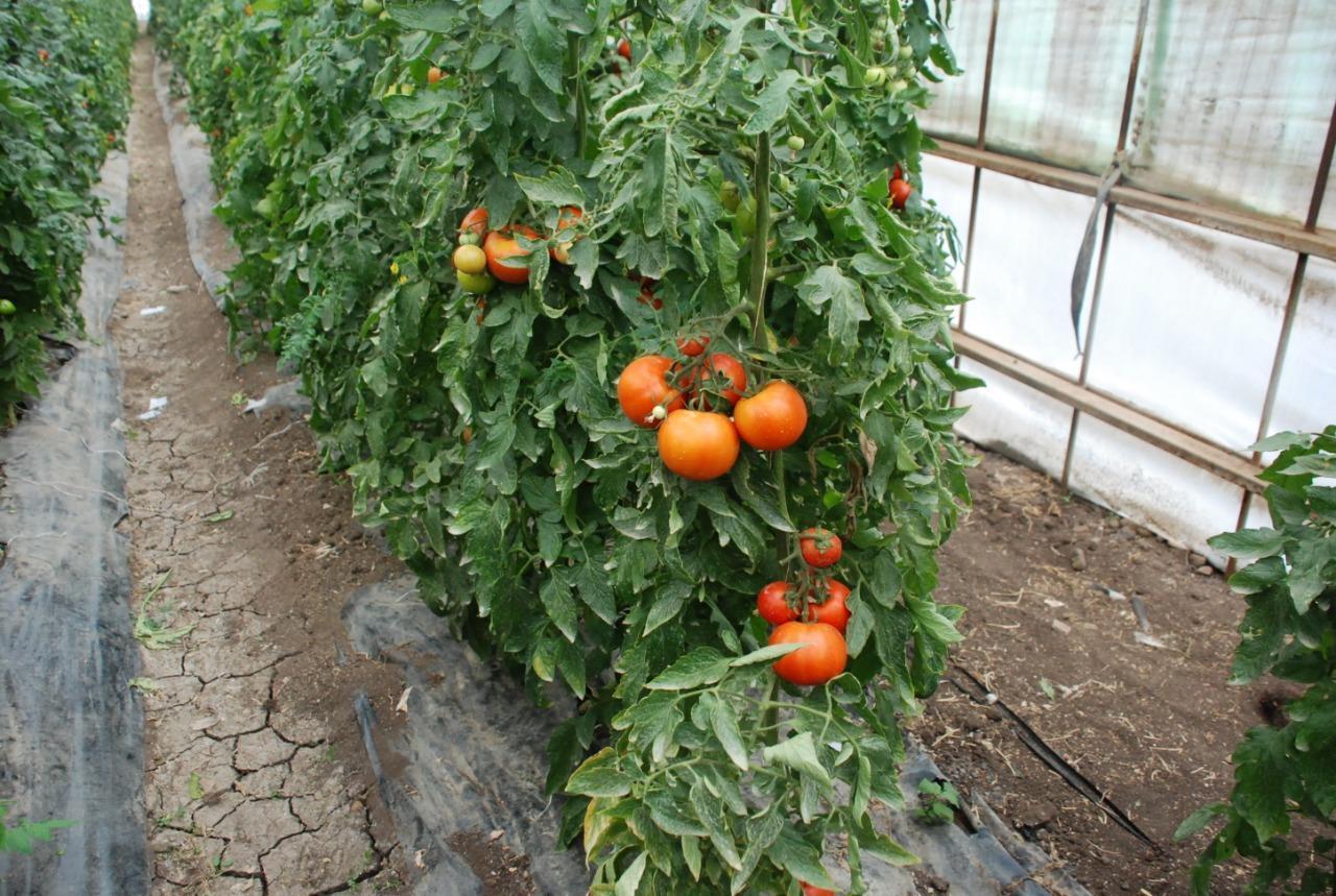 الاكتفاء الذاتي من التقاوي.. مهمة زراعية لتحقيق الأمن الغذائي
