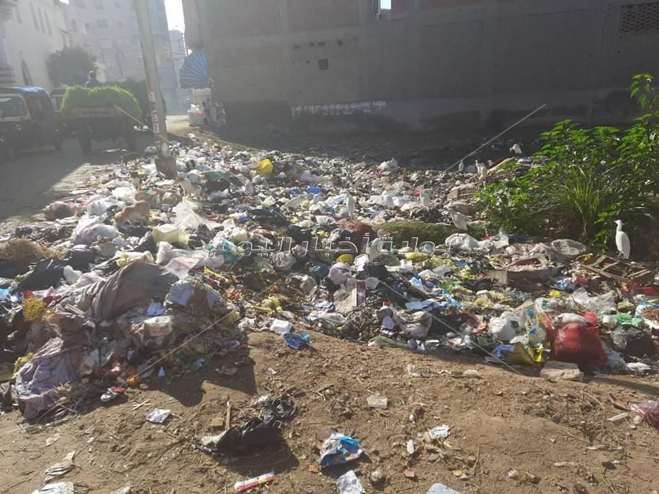 شكوى من الأهالي لتدني مستوى النظافة بمدينة بالغربية