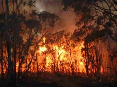 إشعال حرائق غابات بحجم 520 ملعب كرة قدم