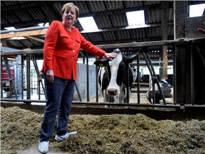 العالم في صور| أنجيلا ميركل في مزرعة للألبان بـ«نينبورستيل»
