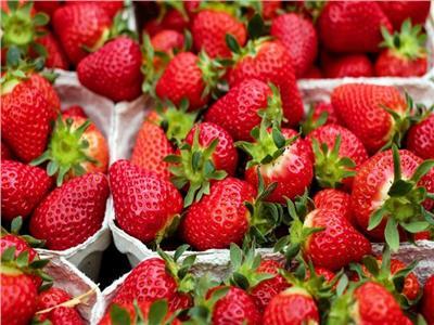 سلسلة متاجر نيوزيلندية توقف بيع فراولة استرالية بعد اكتشاف إبر فيها