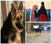 «لو عضك كلب تعمل إيه»| تعرف على عقوبات القانون.. وكيف تحصل على رخصة لكلبك؟