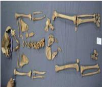 الآثار تكشف هوية الهياكل العظمية للتابوت الأسود بالإسكندرية