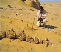 مصر تشارك بحلقة نقاشية حول «رحلة التنوع البيولوجي خلال 40 مليون سنة»