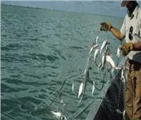 ما حكم صيد الأسماك بالصعق الكهربائي؟.. «الإفتاء» تجيب