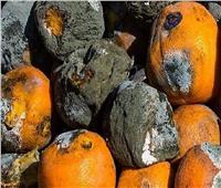ضبط 27 طنا من الخضر والفاكهة الفاسدة داخل ثلاجة بالعاشر من رمضان