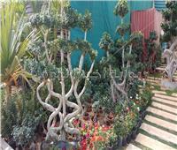 حكايات| الشجرة متعددة الوجوه.. «أناكوندا» النباتات الآسيوية