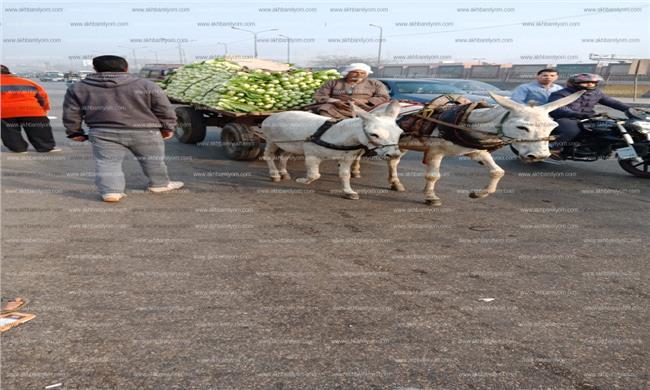 صورة أحد عربات الخضروات