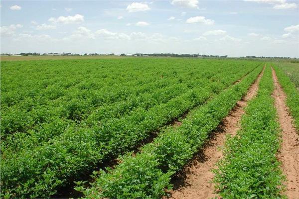 بيع أراضى الإصلاح الزراعي