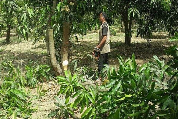 صوره لأحد المزارعين