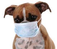 تحذيرات من انتشار إنفلونزا الكلاب