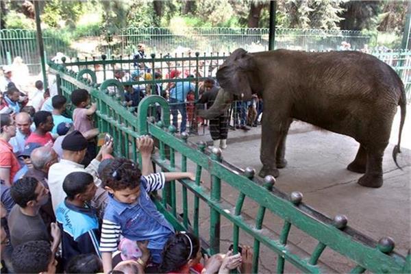 حديقة الحيوان - صورة أرشيفية