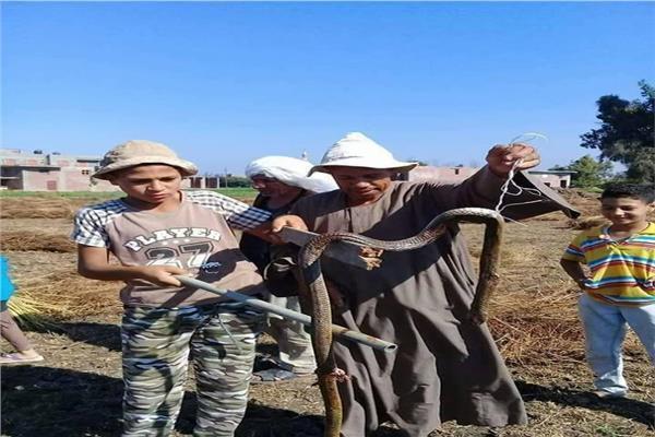 انتشار الثعابين في قرية منية السعيد بالبحيرة