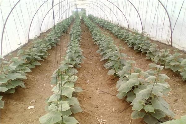 «الزراعة» تواصل حملات المتابعة وتفحص «الصوب» بالدقهلية