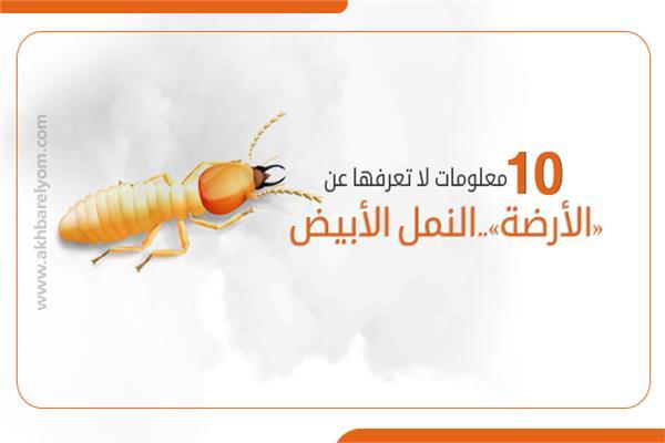 «الأرضة»..النمل الأبيض