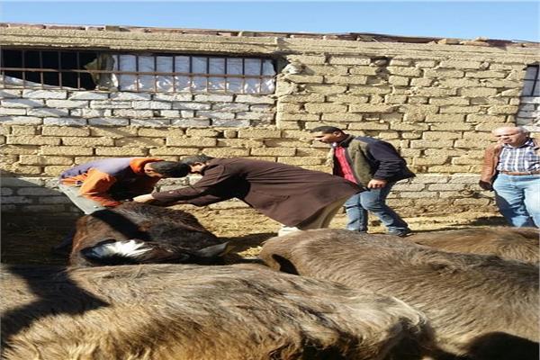 «الزراعة» تتابع المنتفعين من المشروع القومى لإحياء البتلو