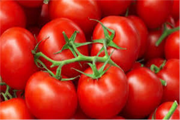 «خبير زراعي»: لا توجد طماطم مسممة وما يتردد «شائعة»