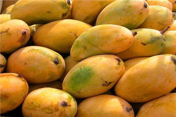 أسعار «المانجو» في سوق العبور السبت 22 سبتمبر