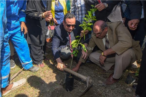 محافظ الإسكندرية يغرس أولى الأشجار في مبادرة الرئيس