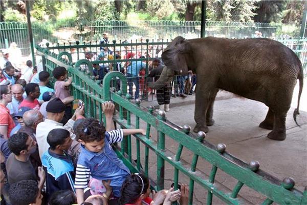حديقة الحيوانات بالجيزة
