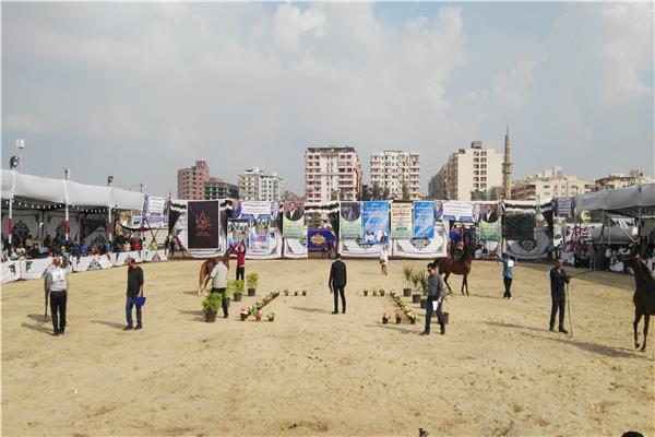 انطلاق فاعليات اليوم الاول لمهرجان الخيول العربية