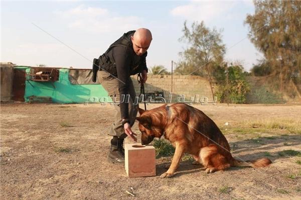 أحد تمرينات الكلاب البوليسية