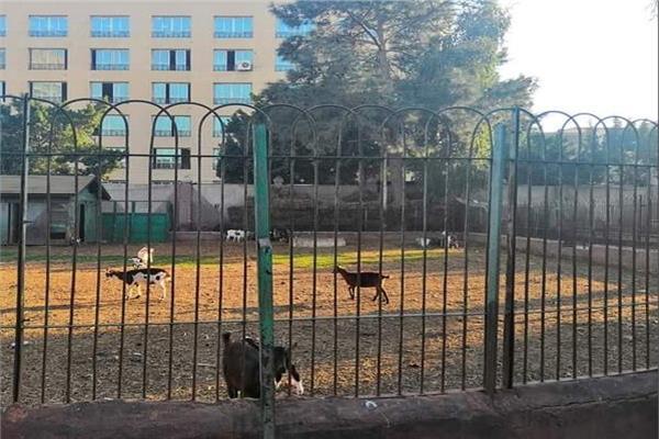 """"""" معيز """" في حديقة الاندلس بطنطا ..والمواطنون بسخرية : نشاط اقتصادي"""
