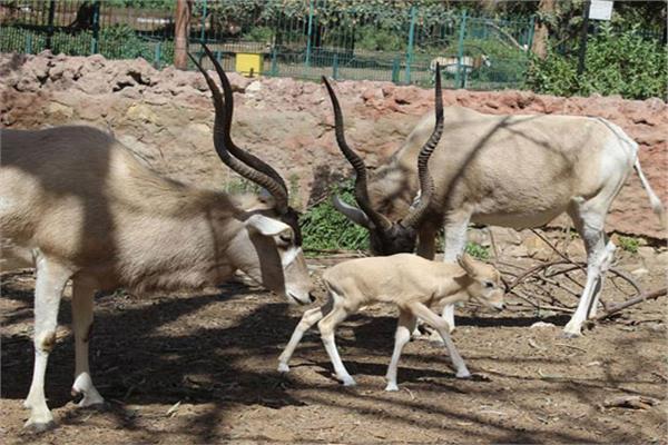 «الزراعة» تغلق حدائق الحيوان بسبب العاصفة الترابية