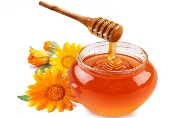 فوائد النحل