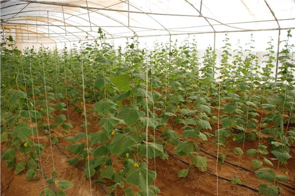 تعرف على عدد التراخيص والمعاينات لإنشاء مزارع الفاكهة خلال شهر