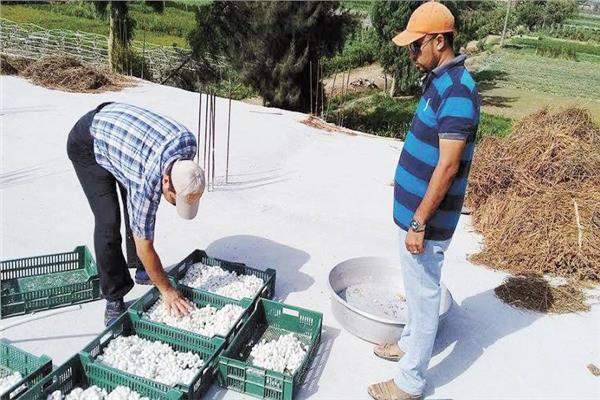 أصغر منتج مصري للحرير.. بيزنس «الدودة» يفتح بيوت