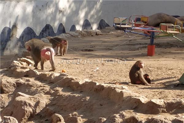 بيت القرود