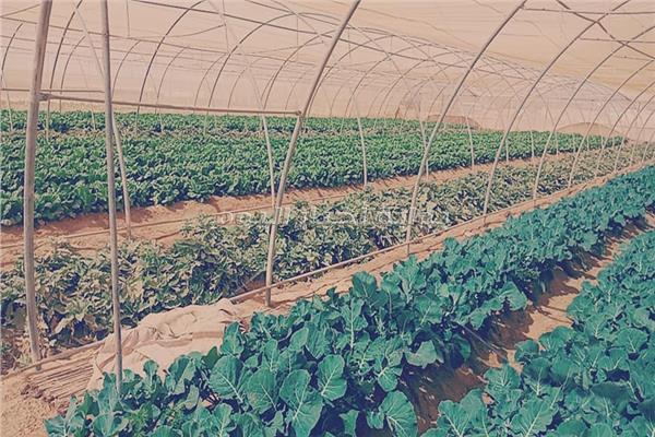 صورة من مزرعة الصوب الخضروات