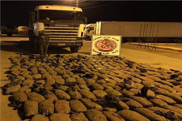 قوات حرس الحدود تضبط 1800 كجم من نبات البانجو المخدر