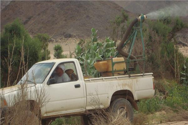 الزراعة تواصل حربها ضد الجراد الصحراوي وتكثف عمليات المكافحة