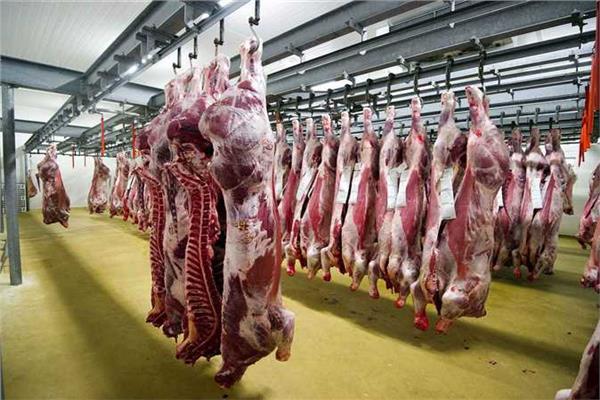 تطوير المجازر وتحصين الحيوانات تتصدر خطة الخدمات البيطرية في 2019