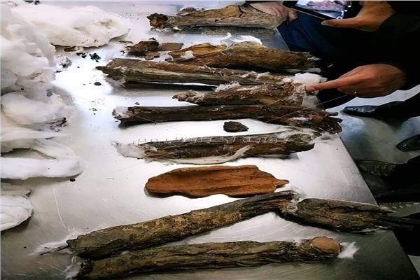 أجزاء المومياء التي تم ضبطها بالمطار قبل شحنها لبلجيكا