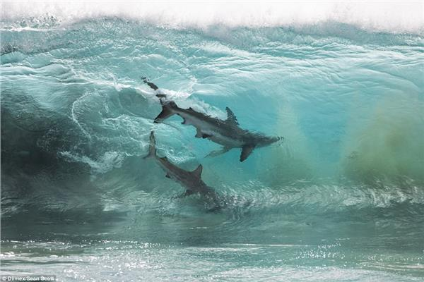 الفيضانات تجرف صغار أسماك القرش