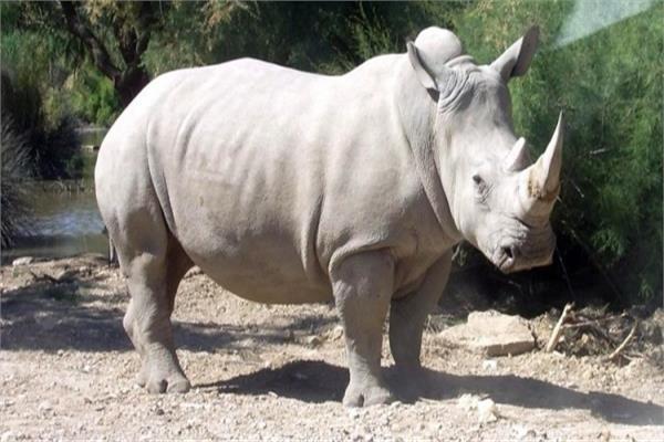 أخرهم «زيزي».. رحلت عن حديقة الحيوان بعد أن أسعدت الملايين 30 عاما